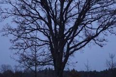 Alster creek tree